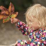 6 Autumn foraging activities for toddlers & preschoolers