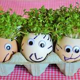Grow your own Egg Cress Heads